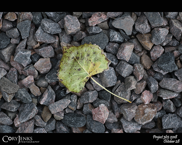"""2018 Project 365: October 28 - Fall Leaf<br /> <br /> """"Anyone who thinks fallen leaves are dead has never watched them dancing on a windy day."""" <br /> <br /> ~ Shira Tamir"""