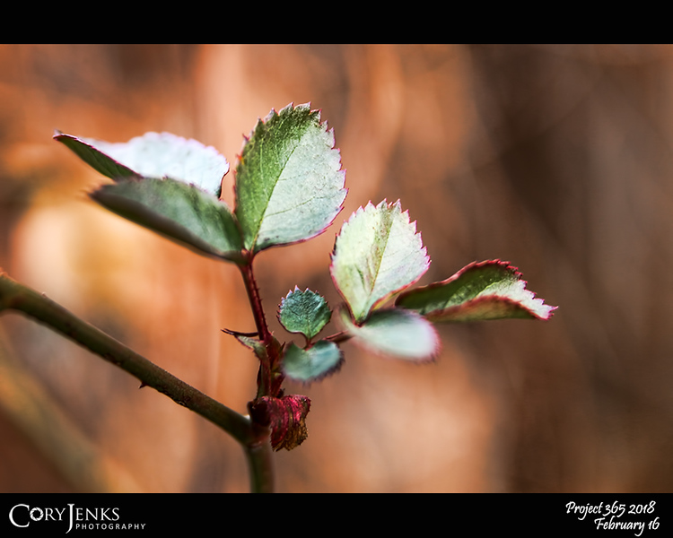2018 Project 365: February 16 - Wintergreen<br /> <br /> A little bit of green struggling to hang on through the winter.
