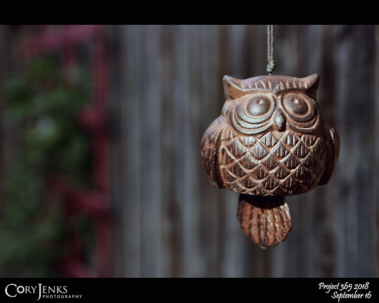 """2018 Project 365: September 16 - Wisdom of the Owl<br /> <br /> """"A wise old owl sat on an oak; The more he saw the less he spoke; The less he spoke the more he heard; Why aren't we like that wise old bird?""""<br /> <br /> ~ Edward H Richards"""