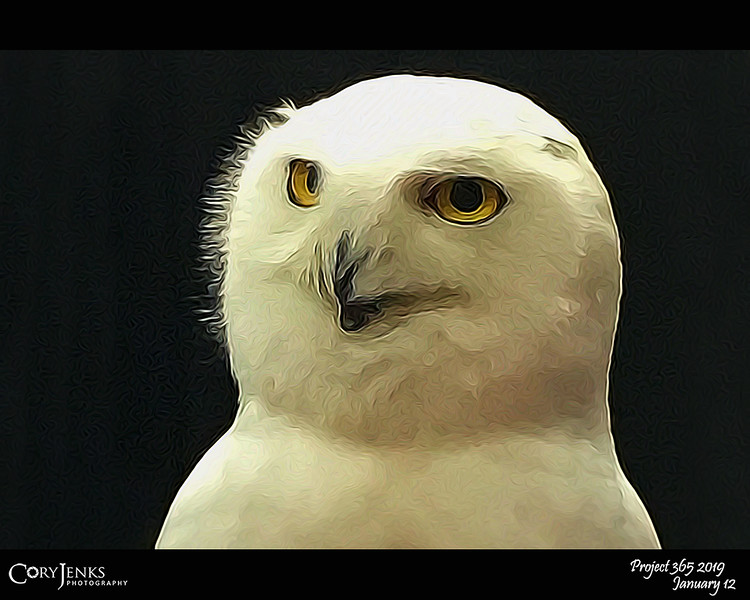 2019 Project 365: January 12 - Snowy Owl<br /> <br /> At the Colorado Sportsman's Expo and with only an iPhone, I took a shot of the snowy owl with the Raptor Education Foundation.
