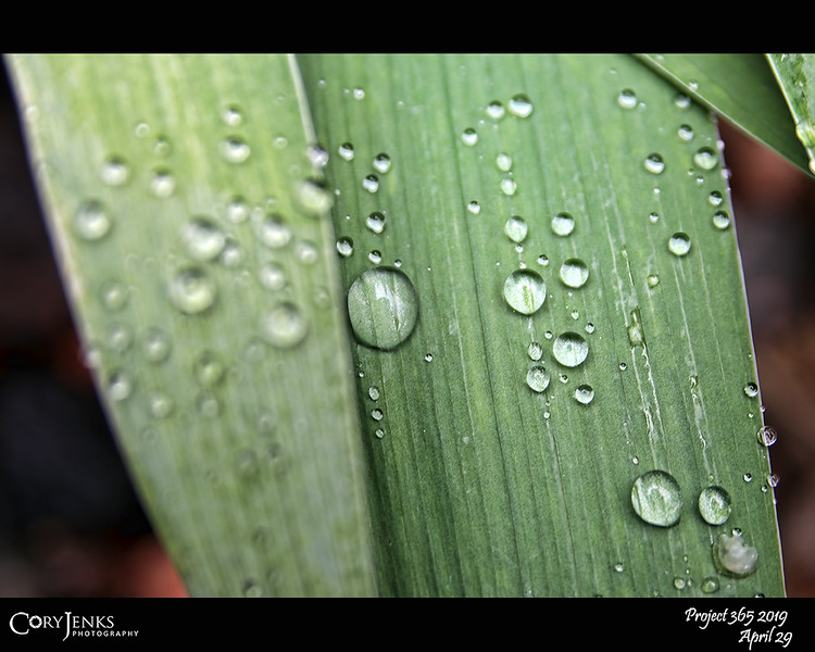 2019 Project 365: April 29 - Droplets<br /> <br /> A bit of needed moisture comes to the area in the forms of rain and snow.