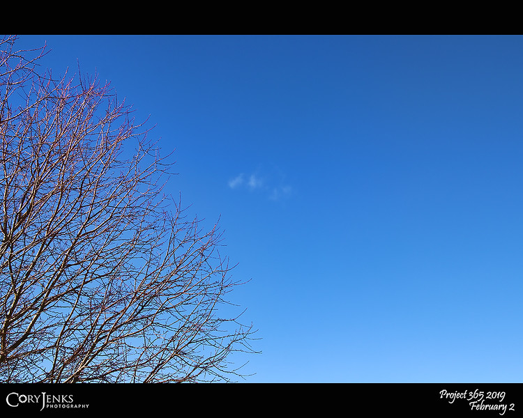 2019 Project 365: February 2 - Blue Skies<br /> <br /> Blue skies<br /> Smiling at me<br /> Nothing but blue skies<br /> Do I see<br /> <br /> Bluebirds<br /> Singing a song<br /> Nothing but bluebirds<br /> All day long<br /> <br /> ~ Ella Fitzgerald