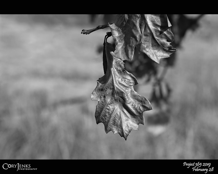 """2019 Project 365: February 28 - Leaf<br /> <br /> """"Never say there is nothing beautiful in the world anymore. There is always something to make you wonder in the shape of a tree, the trembling of a leaf.""""<br /> <br /> ~ Albert Schweitzer"""