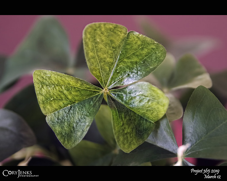"""2019 Project 365: March 12 - Lucky<br /> <br /> """"Luck is believing you're lucky.""""<br /> <br /> ~ Tennessee Williams"""