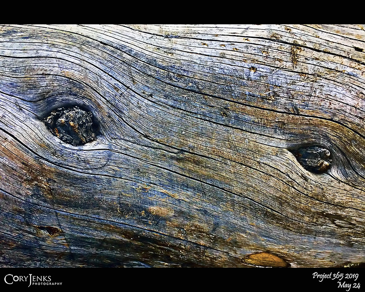 2019 Project 365: May 24 - Twisted Pine<br /> <br /> This fallen tree reveals the spiral growth some pine trees go through.