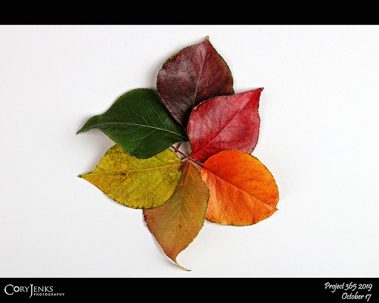 2019 Project 365: October 17 - Fall's Pallet 10<br /> <br /> All the leaves are from the same tree. I have similar photos each year in the Project 365; and by coincidence, this is the exact same day I posted last year. Am I becoming predictable?