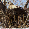 Project 366: April 14 - Wise Old Owl. A nesting owl.