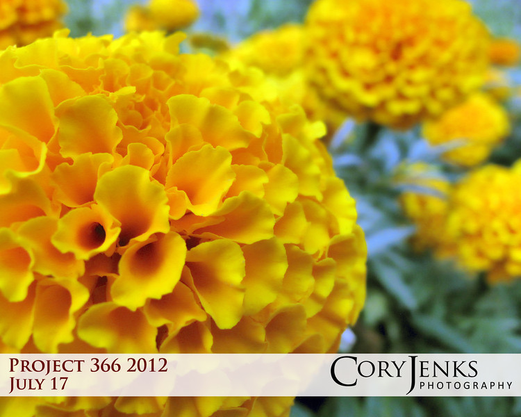 Project 366: July 17 - B3. Beautiful Bethesda Blooms