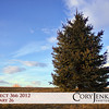 Project 366: January 26 - Lone Tree. A lone evergreen against the beautiful Colorado blue sky.