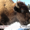 Project 366: February 24 - Bison. The American Buffalo was hunted to near extinction in the late 19th century, yet this creature has been used as a symbol on state flags, currency, and postal stamps.