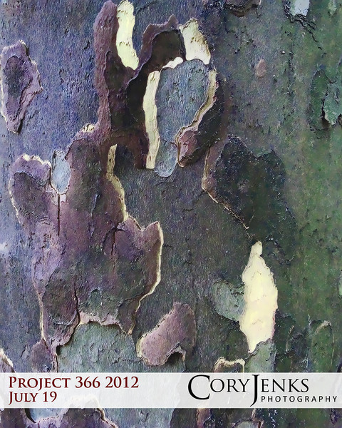 Project 366: July 19 - Geographical Bark. This bark looks more like a geographical map.
