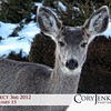 Project 366: February 15 - Odocoileus Hemionus. This mule deer gave me quite the stare-down as I made my way to the car after work. She flinched first and ran off. I Win!