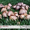 Project 366: May 17 - Schrooms. Not a real common sight in the dry climate of Colorado.