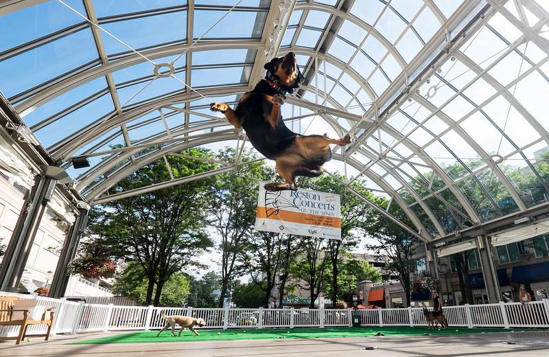 Dog park at Reston Town Center