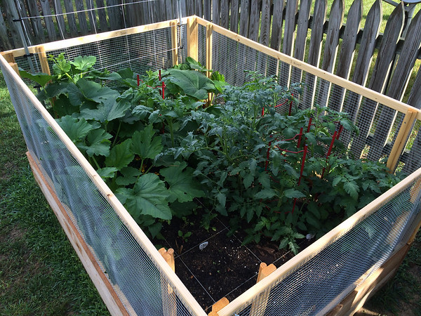 Raised Garden Beds 2