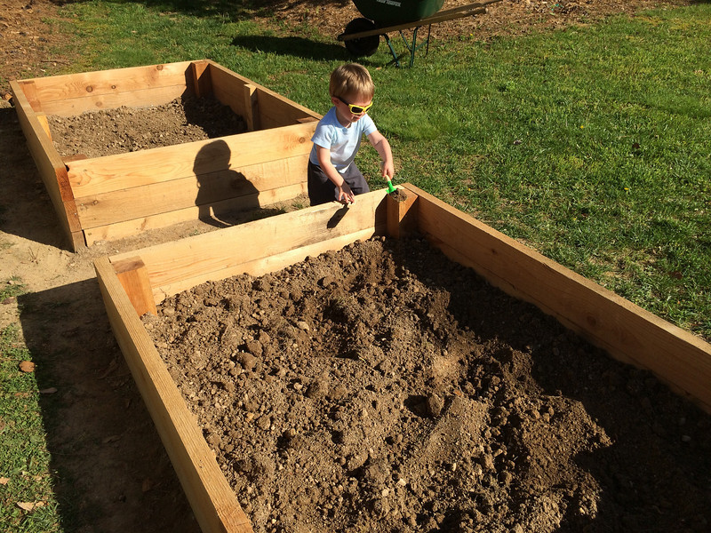 After piling the rest of the dirt back into the bed on top of the cloth. Little man got a kick out of shoveling dirt from one bed to the other.