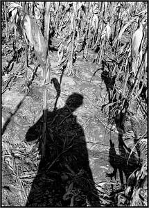 Corn, 645 B&W, 1980