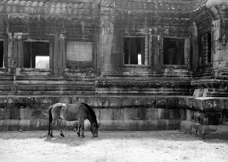 13  horse in a temple