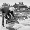 Salt_Kampot_Cambodia_11_Feb_2020_943