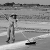 Salt Harvest_Kampot_Cambodia_09_March_2017_1065-Edit