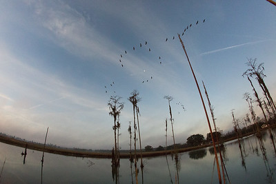 lakelandbirds-6