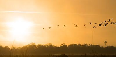 lakelandbirds-17