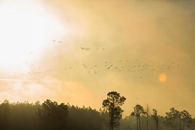 lakelandbirds-22