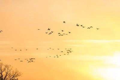 lakelandbirds-8