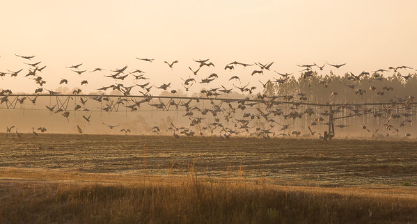 lakelandbirds-15