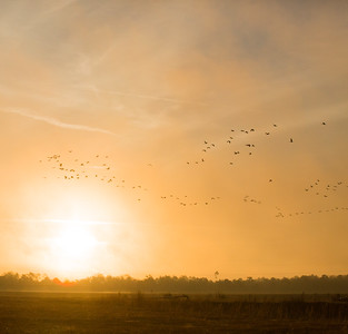 lakelandbirds-19