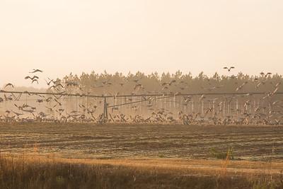 lakelandbirds-14
