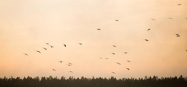 lakelandbirds-1