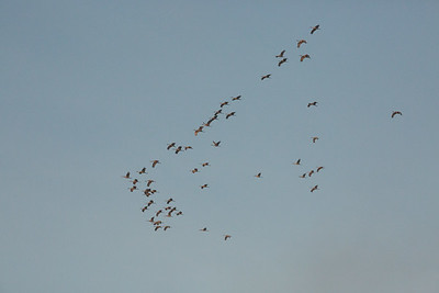lakelandbirds-10