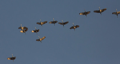 lakelandbirds-23