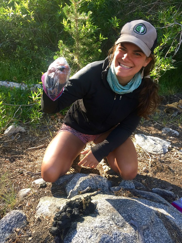 Colleen Ferris collecting bear scat on the John Muir Trail. photo: Dory Trimble