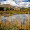 "Day 201 (1 of 2)<br /> Crested Butte South<br /> ""Amazing colors!""<br /> <br /> Another day with two photos, but I felt like day 200 could use 'em! Wow. 200 days.<br /> <br /> Anyway, I pass by this little pond every time I bring my girls to school. I always see the trout jumping. And the reflections on a still day are stunning. I love the colors and the dead tree and everything about it. And I *finally* took a photo of it! Yay me!"