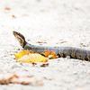 September 2017 - Cottonmouth