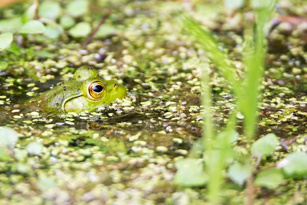 September 2017 - Bullfrog