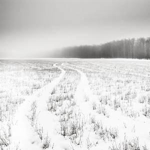 Tracks in Foggy Field