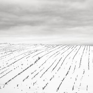 Winter Horizon - Central Wisconsin