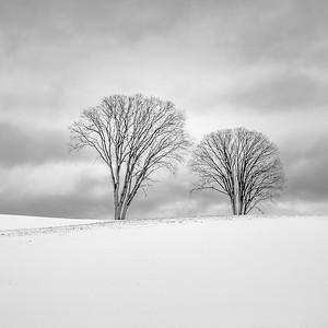 Two Elms in Early Winter
