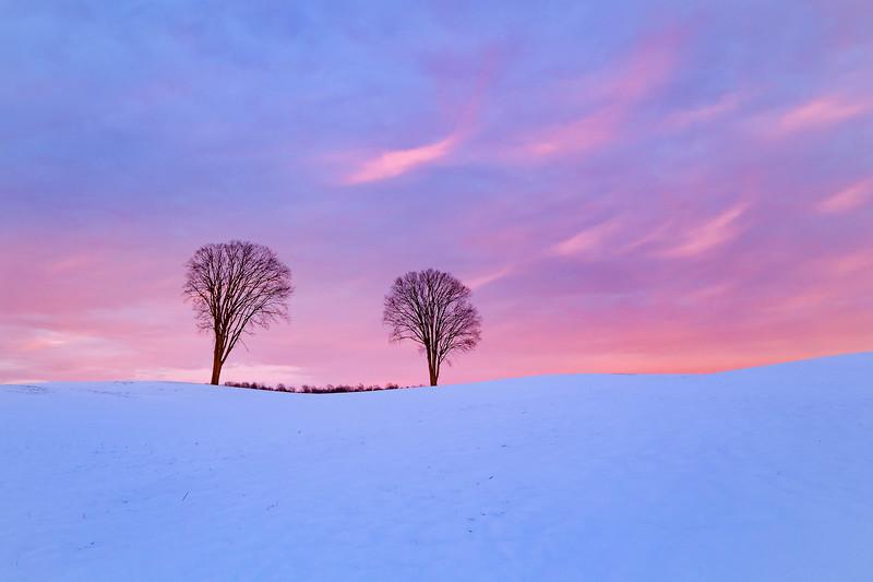 Two Elms in Blue Field
