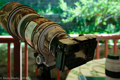 Tripod mounted Canon 300 2.8L w Metabones adapter and Sony Alpha 6000