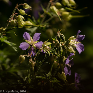 Flowers about 20' away, 300/2.8L / Metabones / Sony a6000 on a tripod