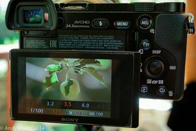 Frame filling fruit w the 300/2.8L
