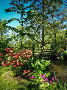 Water Garden Trent Park