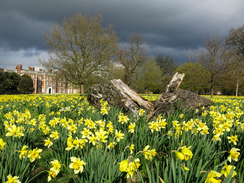 Spring Storm in Trent Park