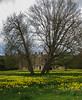Spring in Trent Park