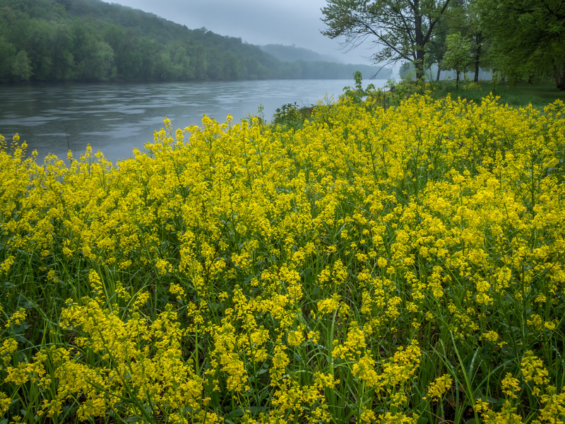 Wildflowers Along the St. Croix