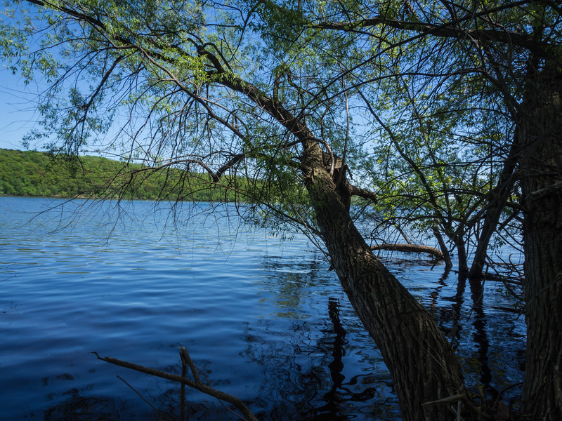 Tree On the Bank Of the St. Croix